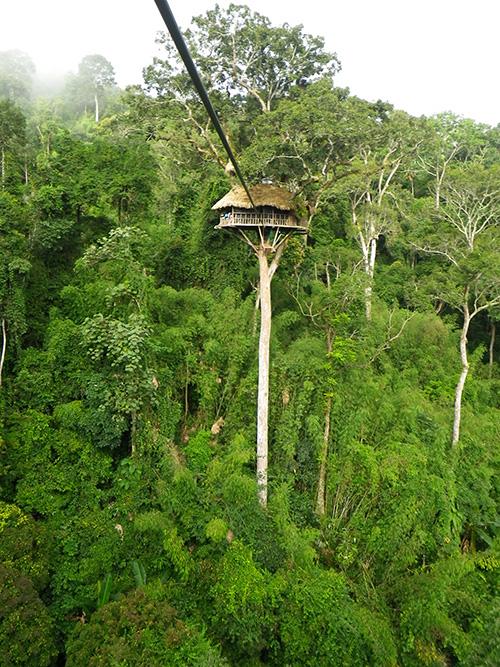 Treehouse #5, Gibbon Experience